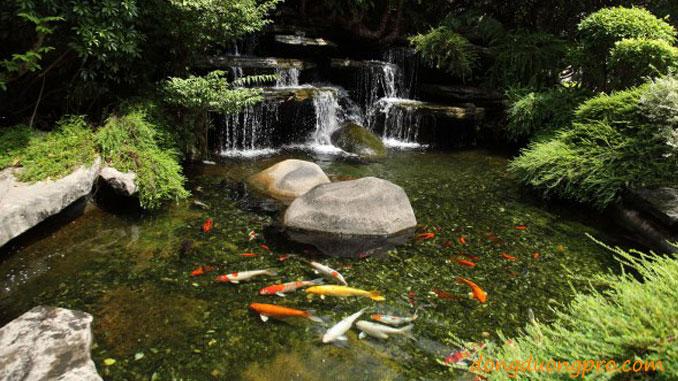 Hồ cá koi tạo may mắn cho gia chủ - Thiết kế sân vườn
