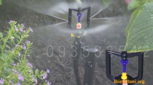 Hệ thống tưới rau sử dụng béc phun mưa có bán kính nhỏ