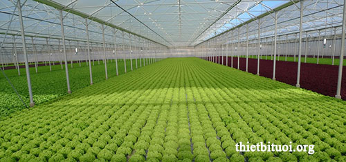 Nhà màng nhà lưới trong hệ thống tưới rau sạch