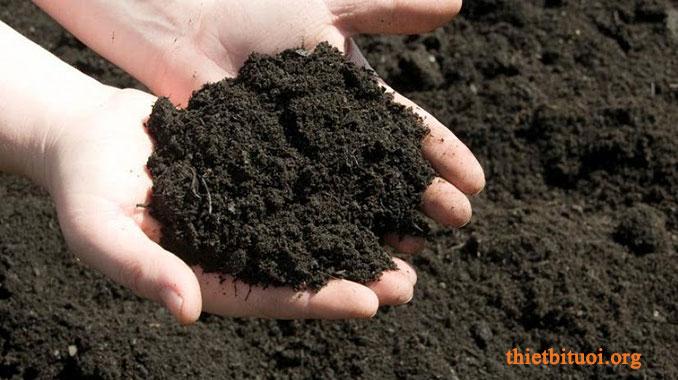 Đất trồng rau sạch tại nhà dùng phân hữu cơ, phân trùn quế
