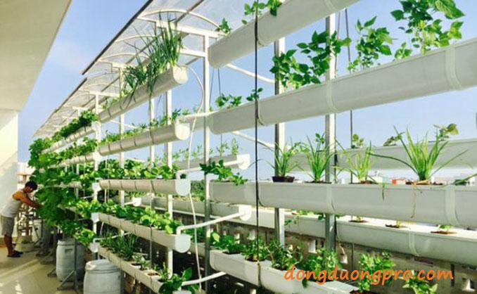 Đất trồng rau sạch tại nhà dùng phân hữu - kinh nghiệm trồng rau sạch