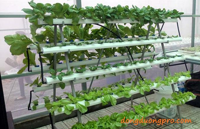 Cách trồng rau sạch tại vườn nhà kết hợp gắn ốngtưới nhỏ giọt bù áp